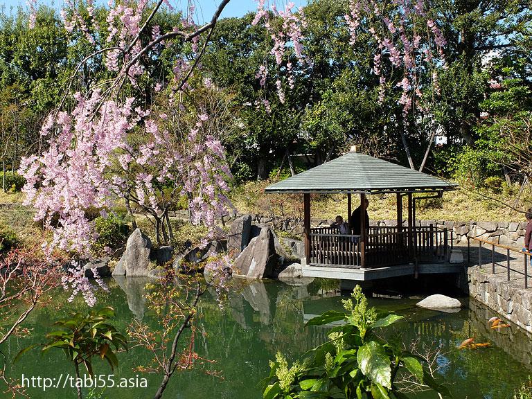 目白庭園のしだれ桜