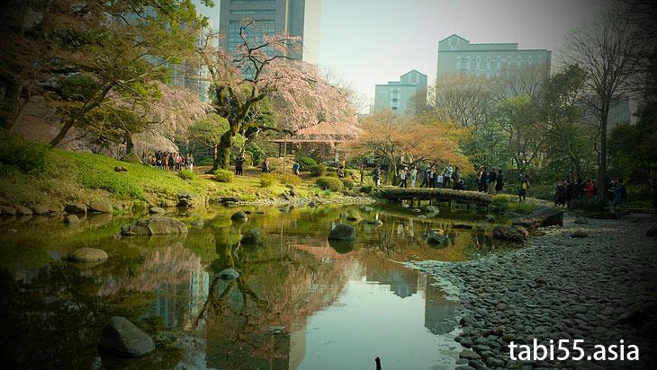 小石川後楽園の枝垂れ桜