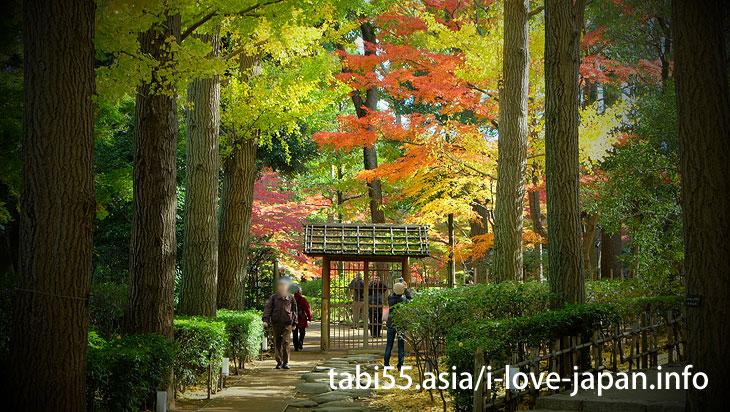 大田黒公園の紅葉は、ライトアップだけじゃない!昼も美しい