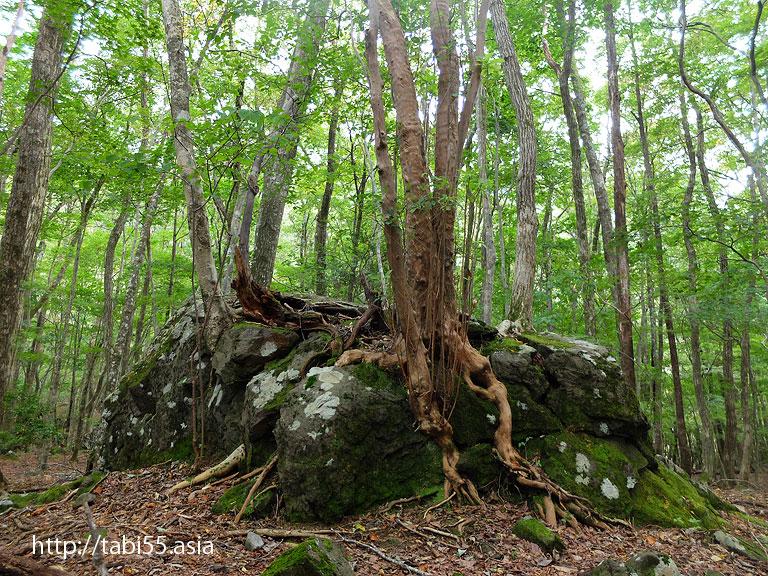 男池湧水群の森