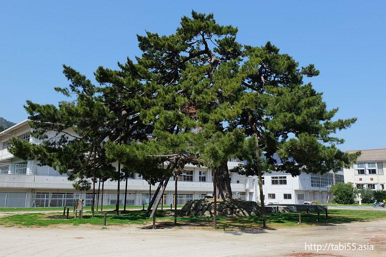 からかさの巨木と水木しげる先生の像|隠岐の島町(島後)