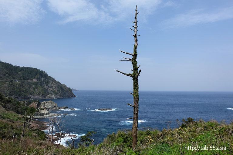 立ち枯れの木|隠岐の島町(島後)の風景