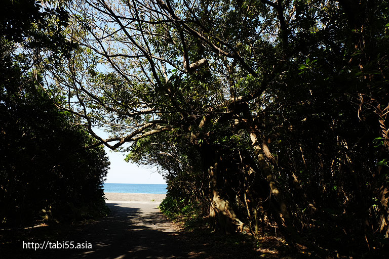 屋久ネコ@志戸子(しとこ)ガジュマル園(屋久島)/Shitoko banyan Garden (Yakushima)