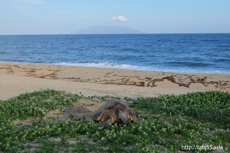 ウミガメの産卵@永田いなか浜(屋久島)