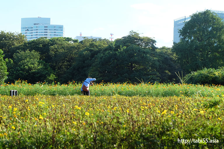 浜離宮恩賜庭園(東京都中央区)