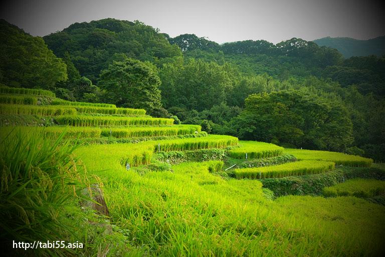 石部棚田(静岡県)/Ishibe rice terrace (Shizuoka Prefecture)