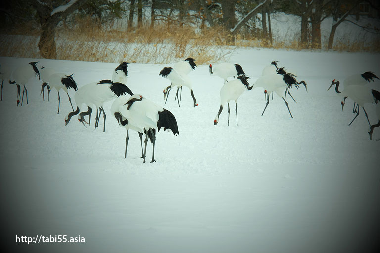 冬の釧路観光(鶴見台)