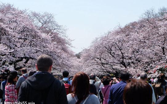 上野恩賜公園の入口付近@上野恩賜公園の桜!モデルコース
