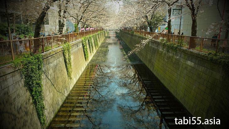 いよいよお花見!目黒川沿いをお散歩