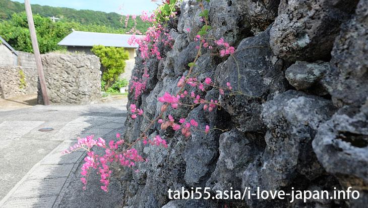 花良治集落を散策@喜界島の観光!行ってよかった【おすすめ】