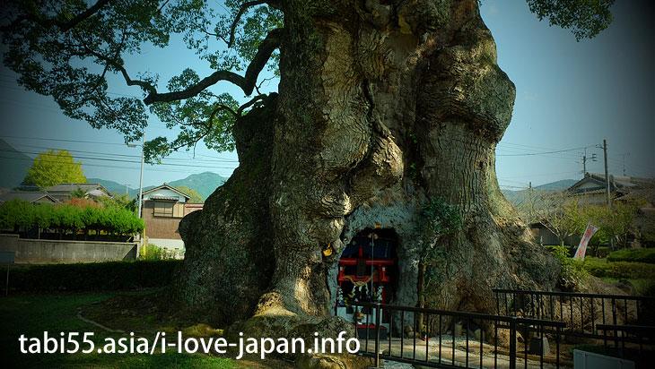 National treasure! Kawago