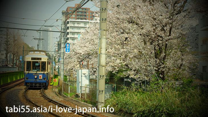 面影橋|池袋駅から30分以内の桜の名所