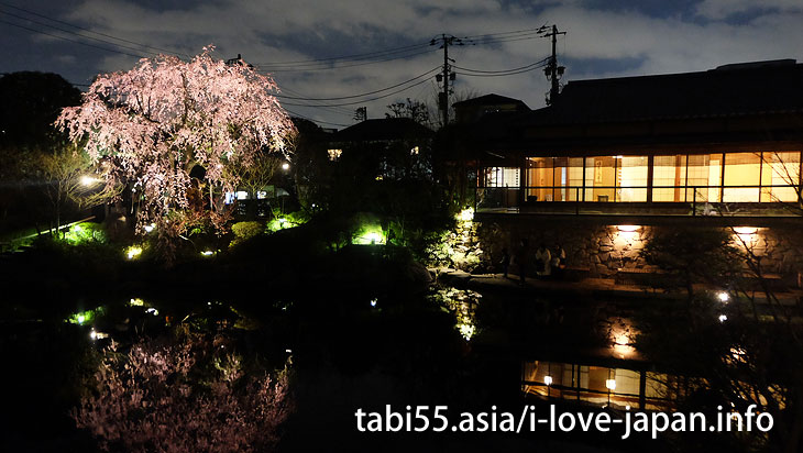 Mejiro garden|Ikebukuro Station【West Exit】Sakura's sightseeing within walking distance