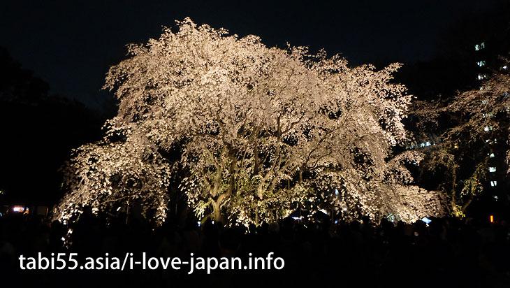 Rikugi-En Garden (about 16 minutes by train from Ikebukuro station)