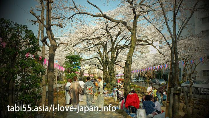 Harima Saka Sakura Namiki (13 minutes by Marunouchi line from Ikebukuro station)