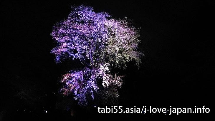 六義園|池袋駅から30分以内の桜の名所