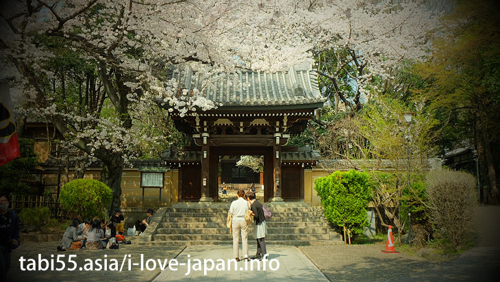 Houmyo-ji Temple| Ikebukuro Station【East Exit】Sakura's sightseeing within walking distance