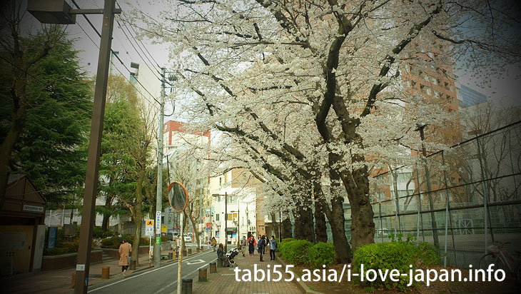 Cherry blossom trees at Nishi Ikebukuro Park|Ikebukuro Station【West Exit】Sakura's sightseeing within walking distance
