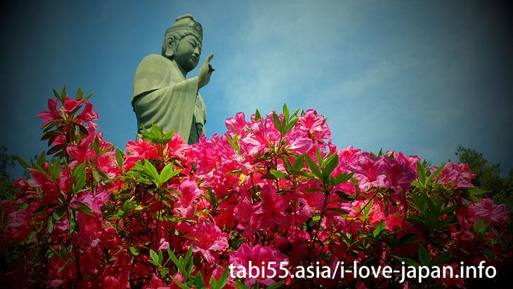 Take a walk in the azalea ♪/Shiofune Kannon-ji Temple' Azaleas(Ome,Tokyo)